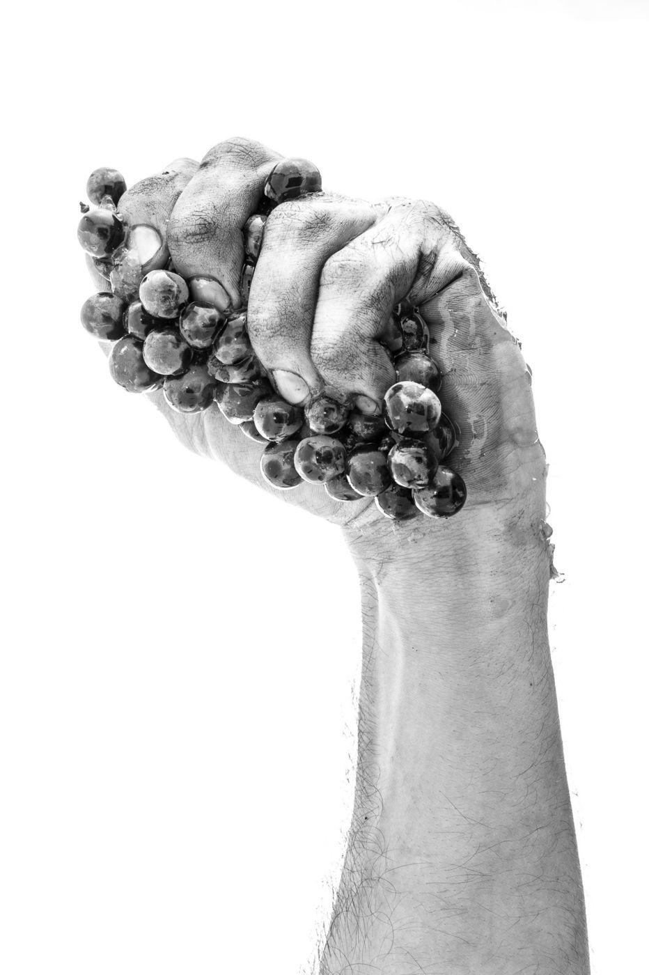 Badens (11) : main de vigneron du Minervois