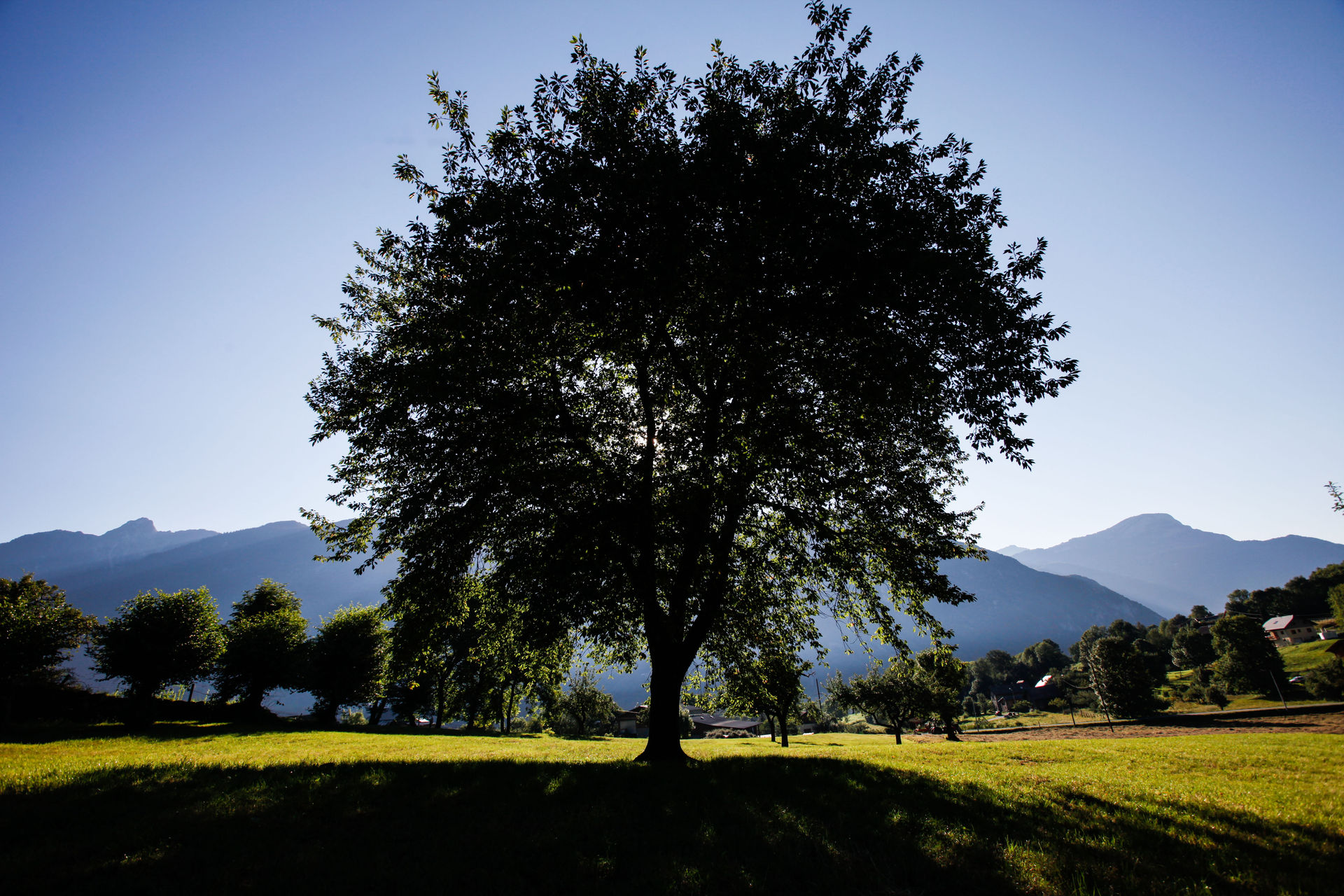 Savoie. Cerisier.